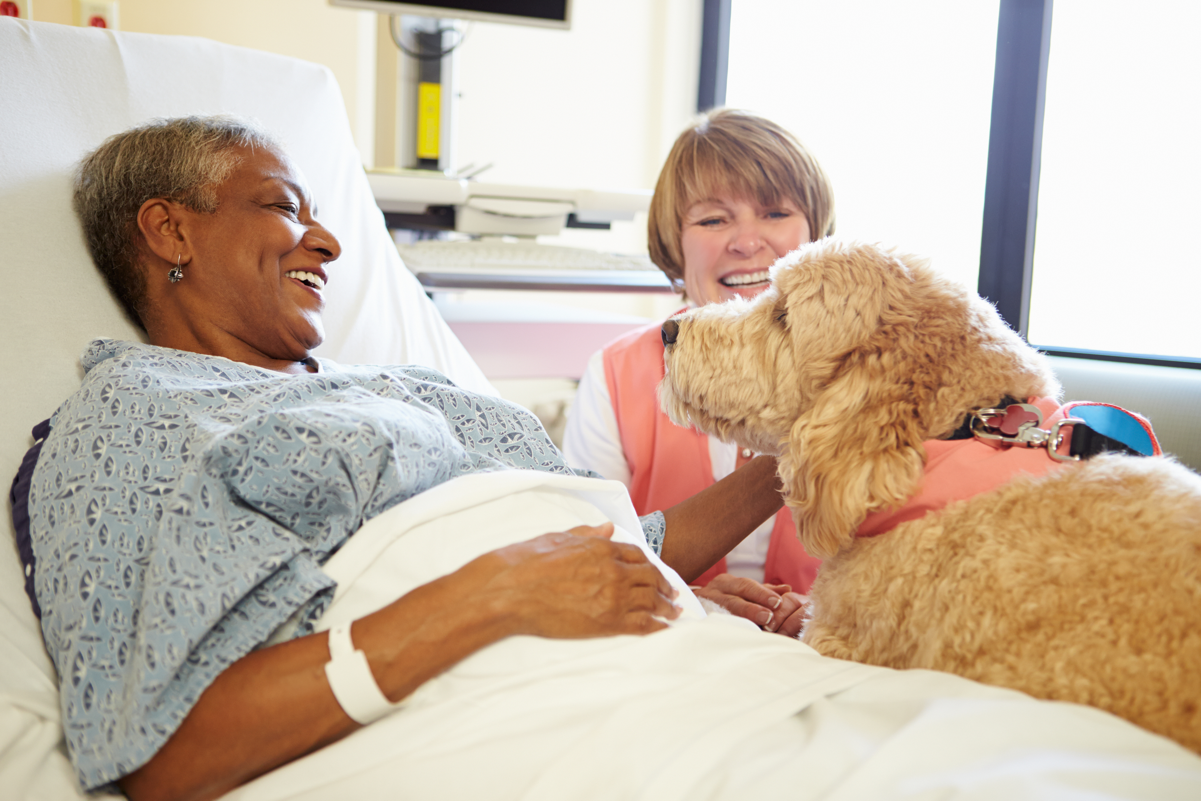 Caring Canin'es Therapy Dog